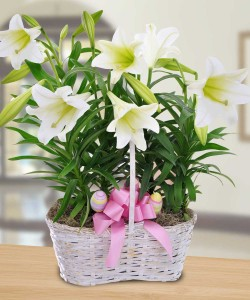 E_Easter_Lily_Basket__08801.1362069051.1280.1280